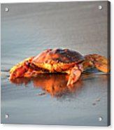 Sunset Crab Acrylic Print