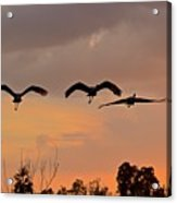 Sunset Fly Over Acrylic Print
