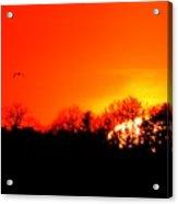 Sunset Flying Three  Acrylic Print