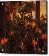 Sunset Garden Acrylic Print