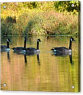 Sunset Goose Acrylic Print