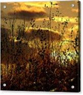 Sunset Grasses Acrylic Print