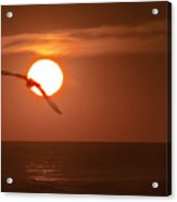 Sunset Gull No.1 Acrylic Print