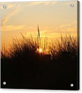 Sunset In The Grass Acrylic Print