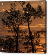 Sunset In The Pine Woods Acrylic Print