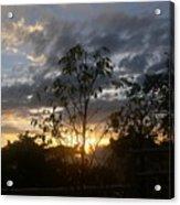 Sunset Leaves 5 Acrylic Print