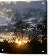 Sunset Leaves 6a Acrylic Print