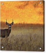 Sunset Lover Acrylic Print