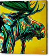 Sunset Moose Acrylic Print