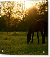 Sunset Over A Spring Meadow Acrylic Print