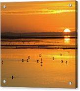 Sunset Over Arcata Marsh, With Avocets Acrylic Print