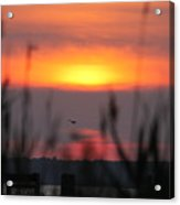 Sunset Over The Reeds Acrylic Print