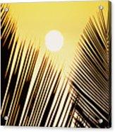Sunset Palm Fronds Acrylic Print