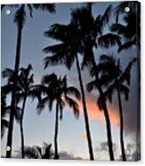 Sunset Palms Acrylic Print by Kelly Wade
