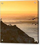 Sunset Pelicans IIi Acrylic Print