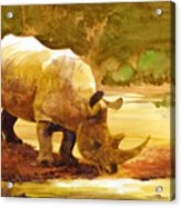 Sunset Rhino Acrylic Print by Brian Kesinger