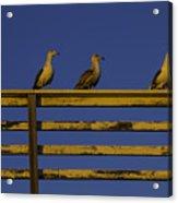 Sunset Seagulls Acrylic Print