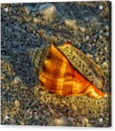 Sunset Seashell Acrylic Print