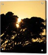 Sunset Silhouette II Acrylic Print