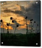 Sunset Silhouettes In June Acrylic Print
