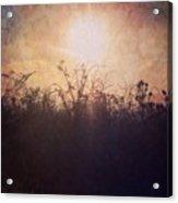 Sunset Song Acrylic Print