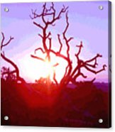 Sunset Through Silhouetted Tree In Desert 2 Acrylic Print