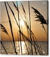 Sunset Through The Dune Grass Acrylic Print