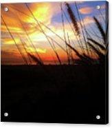 Sunset Through The Sea Grass Acrylic Print