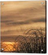 Sunset Through The Seagrass Acrylic Print