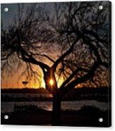 Sunset Through The Tree Acrylic Print
