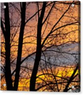 Sunset Through The Tree Silhouette Acrylic Print