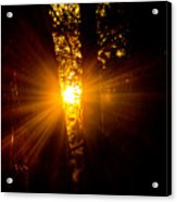 Sun Bursting Through The Trees, Chiloquin Oregon Acrylic Print