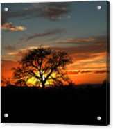 Sunset Tree Acrylic Print