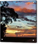 Sunset Tree Florida Acrylic Print