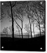 Sunset Trees Acrylic Print
