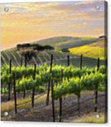 Sunset Vineyard Acrylic Print