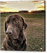Sunset With My Good Boy Brownie  Acrylic Print