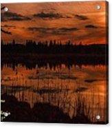 Sunsettia Gloria Catus 1 No. 1 L A. Acrylic Print