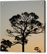 Sunsetting Thru The Trees Acrylic Print