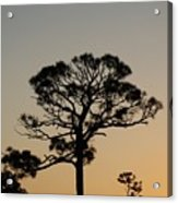 Sunsetting Trees Acrylic Print