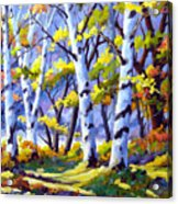 Sunshine And Birches Acrylic Print