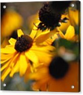 Sunshine And Daisies Acrylic Print