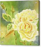 Sunshine And Yellow Roses Acrylic Print