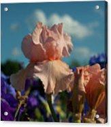 Sunshine Dance Acrylic Print