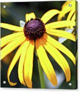 Sunshine Flower Acrylic Print