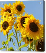 Sunshine Happy Acrylic Print