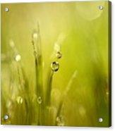 Sunshine Moss Acrylic Print