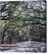Sunshine On Live Oaks Acrylic Print