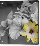 Sunshining Yellow Acrylic Print