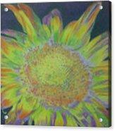Sunverve Acrylic Print